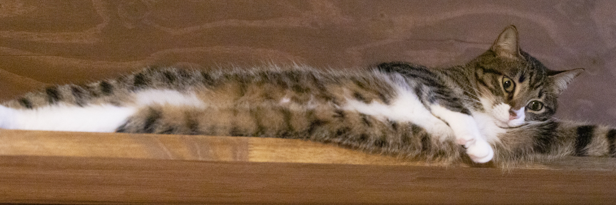 パーマリンク先: CATS PORTRAITS